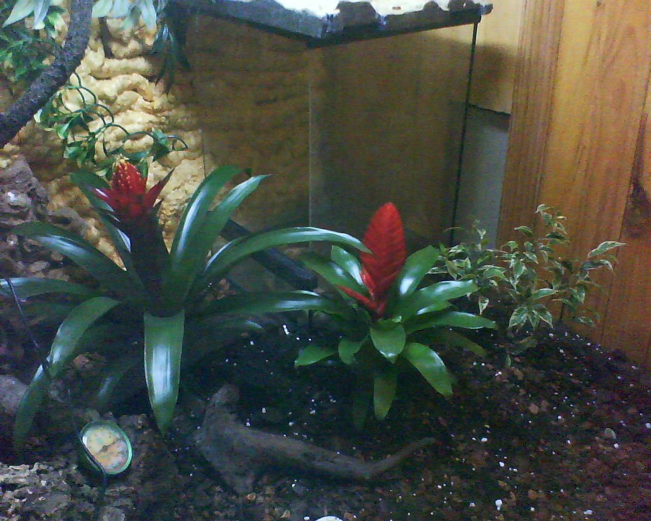 plante pour dragon d eau